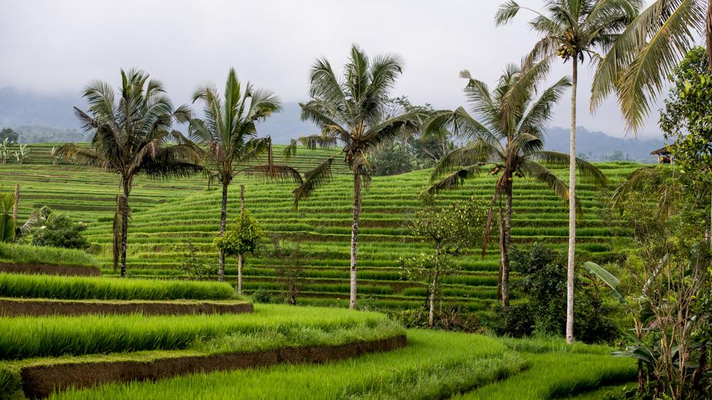 Najpiekniejsze Tarasy Ryżowe Bali-15