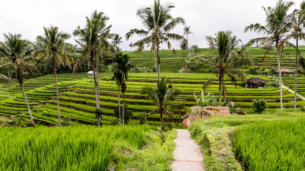 Najpiekniejsze Tarasy Ryżowe Bali-4