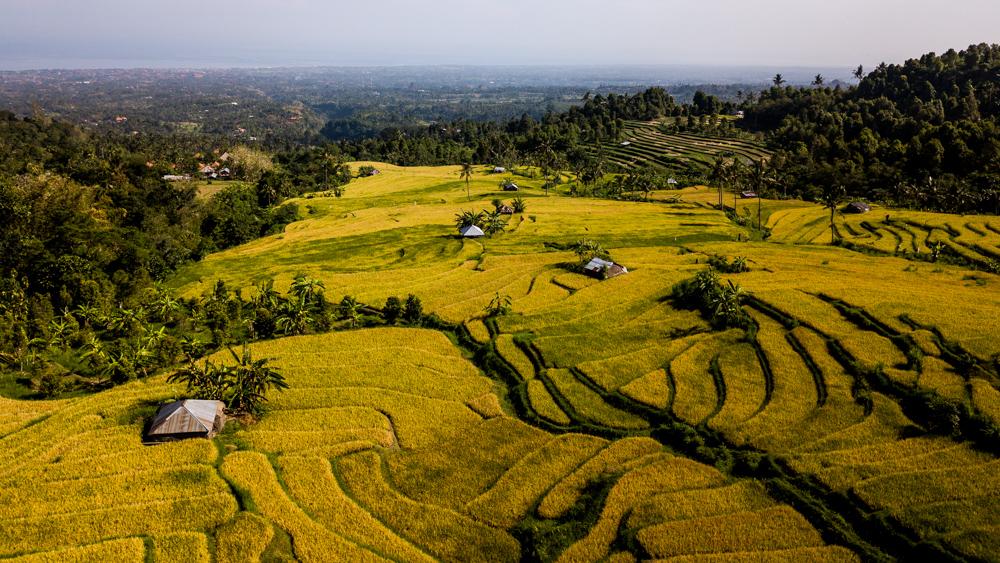 Tarasy ryzowe Sambangan-1