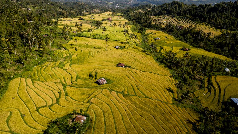 Tarasy ryzowe Sambangan-3