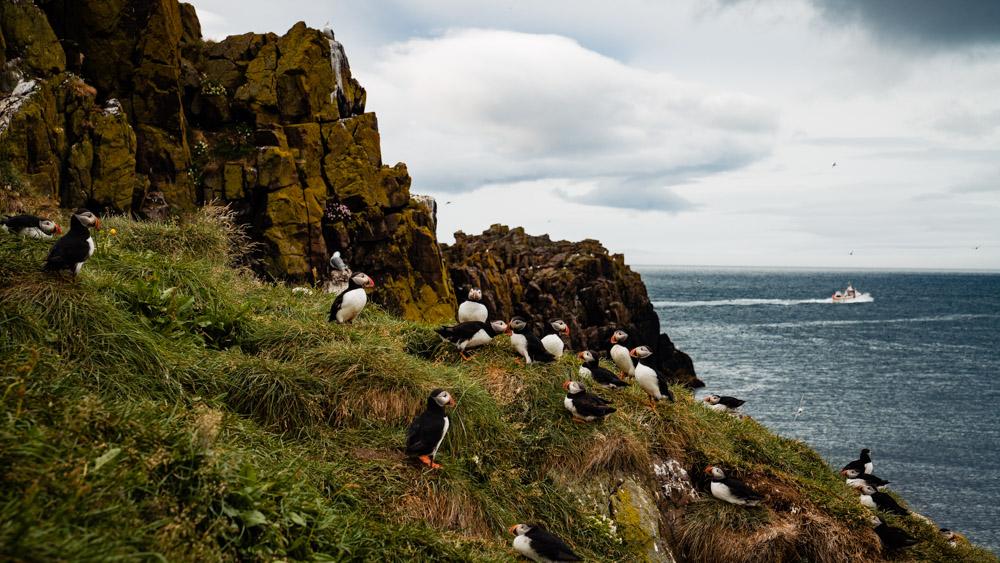 islandia maskonury