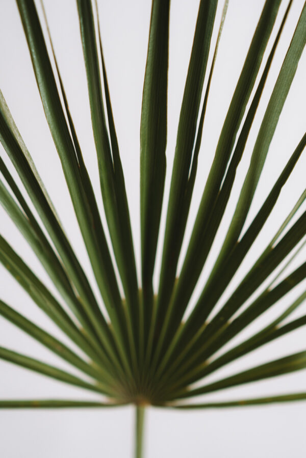 Lisc palmy zielony