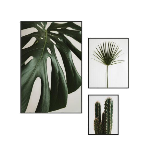 Poster botaniczny