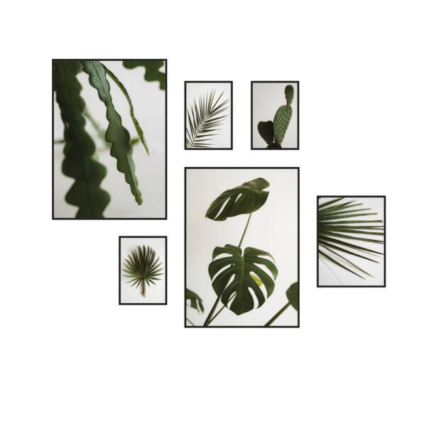 Plakaty z roslinami