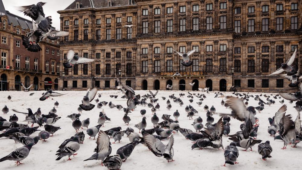 Co zobaczyc w Amsterdamie